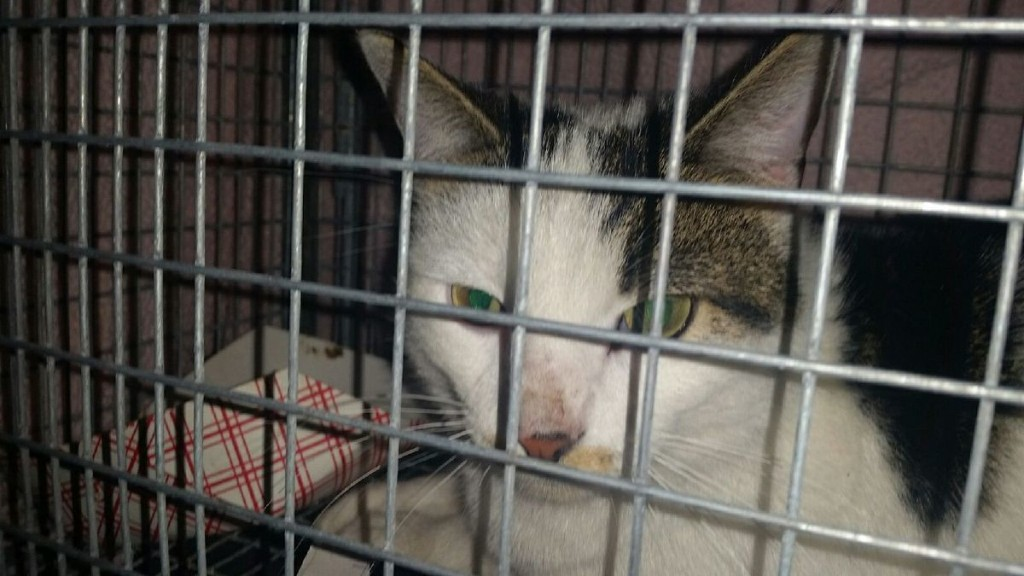 Cat seen scalded in Facebook video is rescued, being treated at shelter