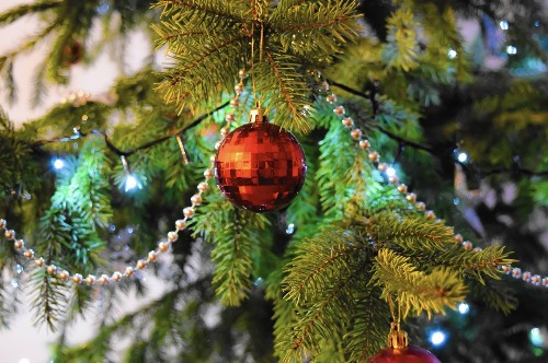 Oh, Christmas tree: Tips for choosing a tree for the holidays