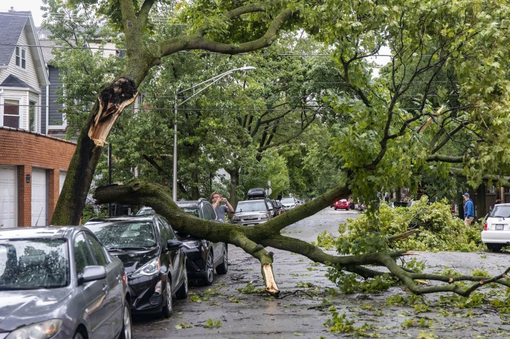 Commentary: 7,300 trees lost in the storm: Just one reason Chicago needs an urban forestry board