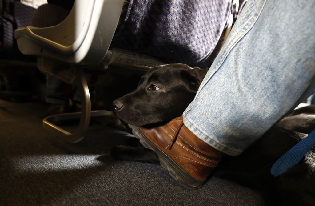 Feds ban emotional support animals from planes; new rule allows only dogs as service animals