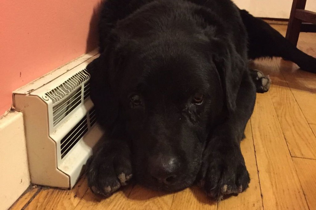 A good dog story