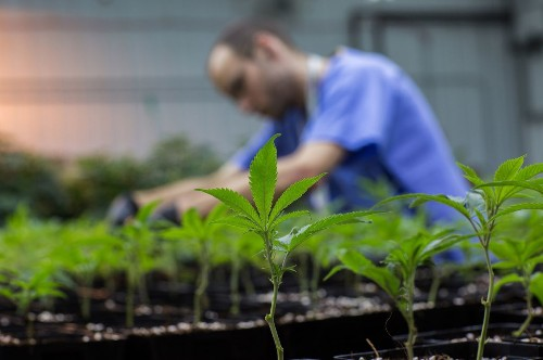 Medical marijuana patients report reduction in use of prescription drugs