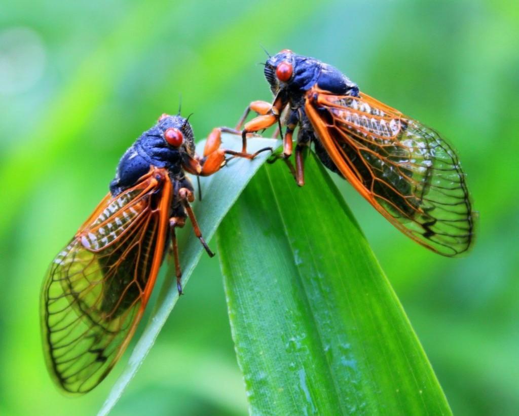 Column: Annual dog-day cicadas signal height of summer