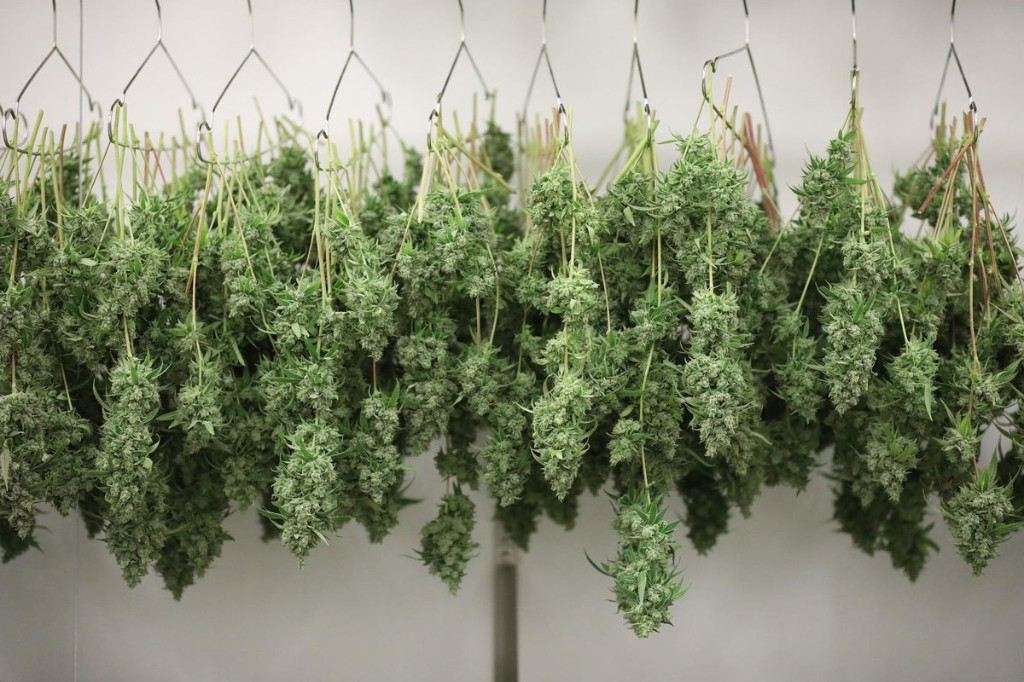 Legal marijuana question a step closer to being on November ballots in Illinois