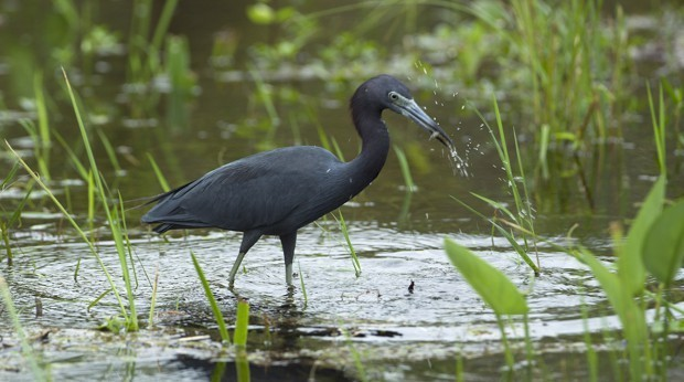 New Oil Drilling Could Be Coming to the Everglades