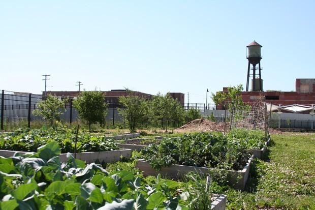 Federal Dollars for Urban Farms
