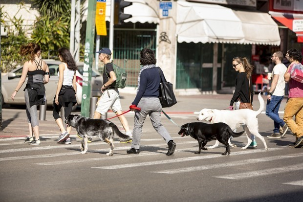 The City Obsessed With Dogs Made an App Just for Them