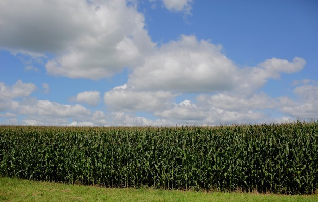 How 'Corn Sweat' Makes Summer Days More Humid