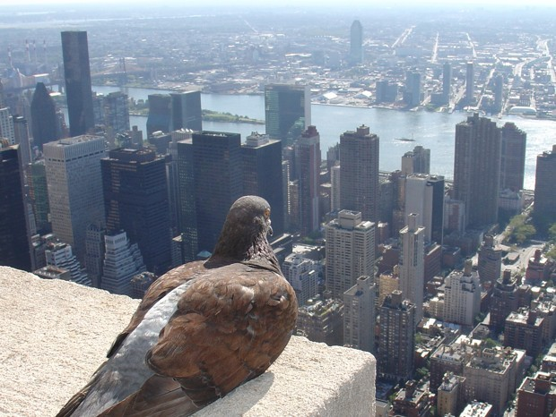 Cities Are One Big Evolutionary Experiment