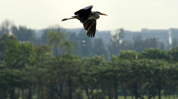 How Singapore Makes Biodiversity an Important Part of Urban Life