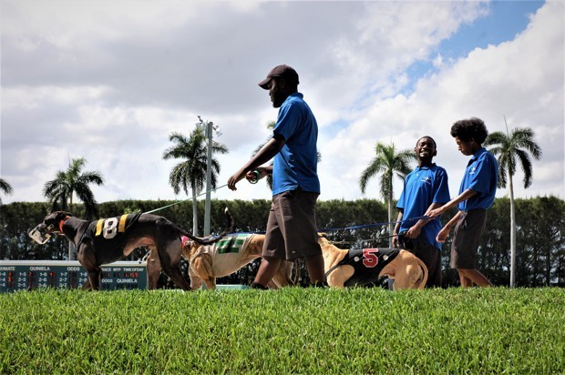 At Palm Beach Kennel Club, a Vilified Sport and a Way of Life End