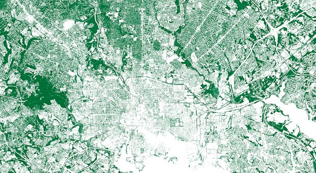 Every Tree in the City, Mapped