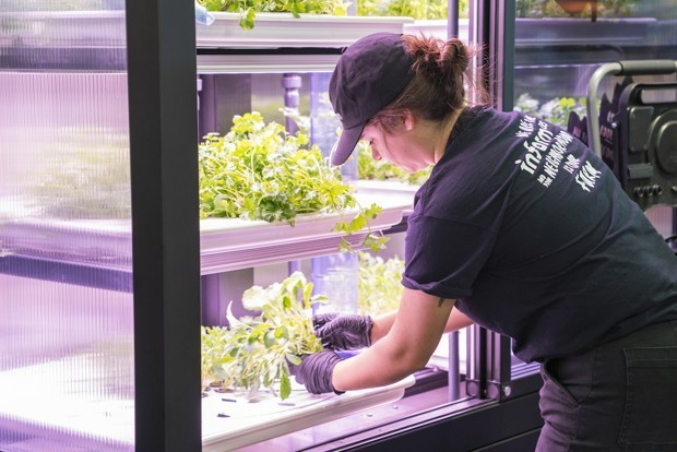 Grocery Stores Near Seattle Are Getting Vertical Farms