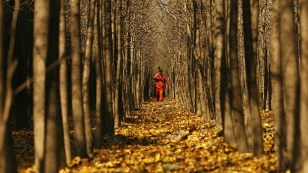 China Is Building a Great Wall of Trees to Fight Climate Change