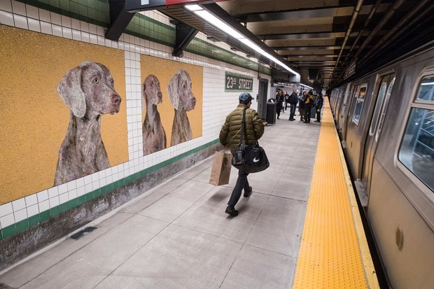 The New Stars of a NYC Subway Station: Very Good Doggos