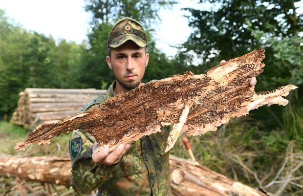 Germany Makes a National Commitment to Rescue Its Forests