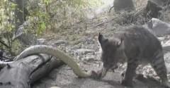 Discover rattlesnakes