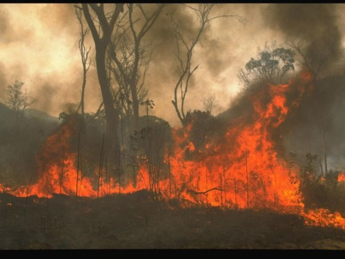 Incendio en Amazonas: Causas, reacciones y todo lo que debes saber