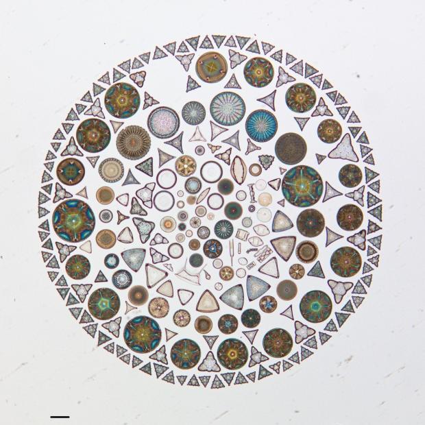 ケイ藻アートの世界--なんとなく神秘的に見える小さな芸術 - CNET Japan