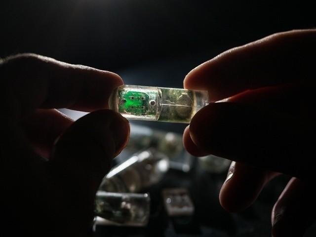 MIT、胃の出血を飲んで調べるカプセル--遺伝子操作バクテリアと無線回路が合体