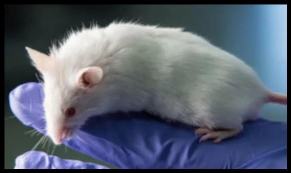 Resulta que los ratones son una adorable arma contra el 'deepfake'