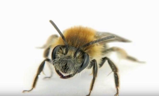 Walmart patenta una abeja robot que puede detectar polen