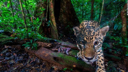 Google-backed project is collecting millions of wildlife camera-trap images