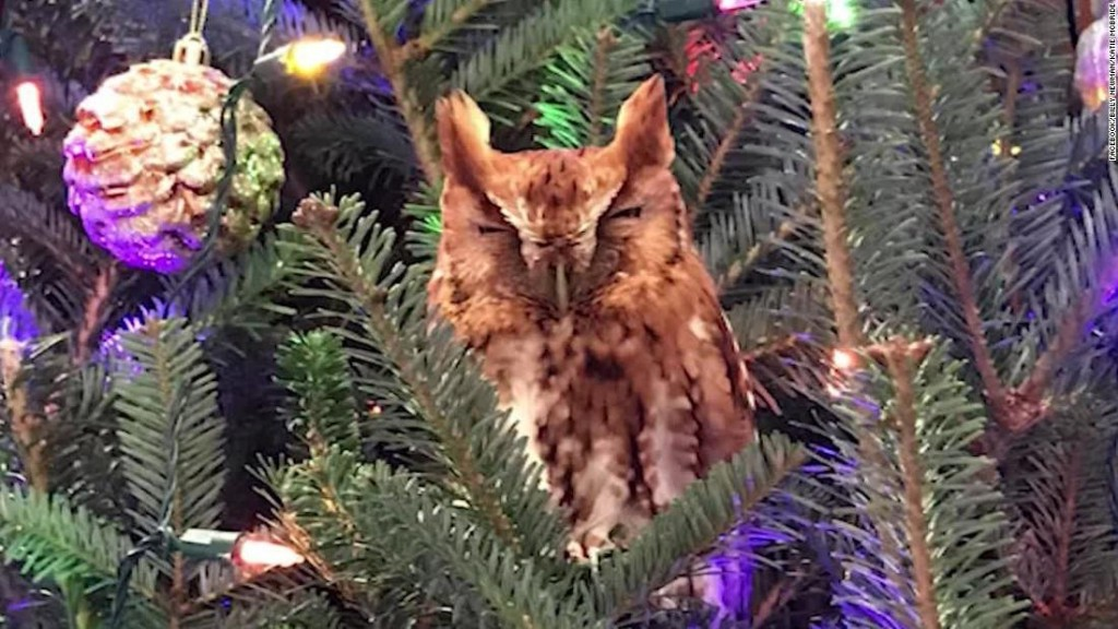 A Georgia family found an owl hiding in their Christmas tree