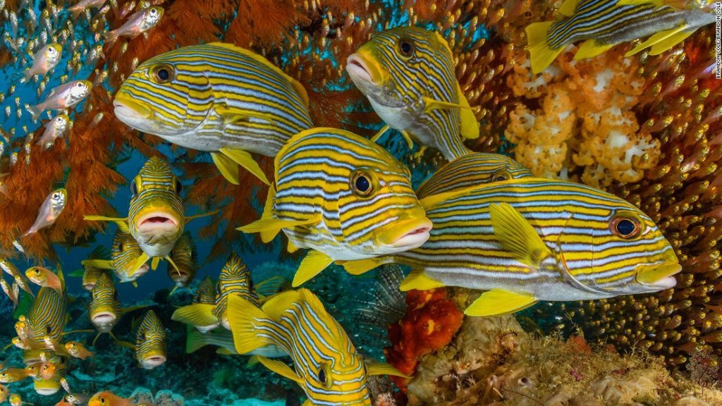 Dreaming of the deeps: World's most epic scuba diving destinations