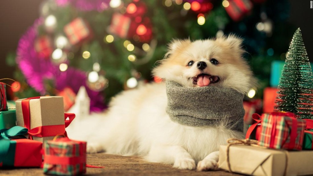 41 gifts for pets and the people who love them
