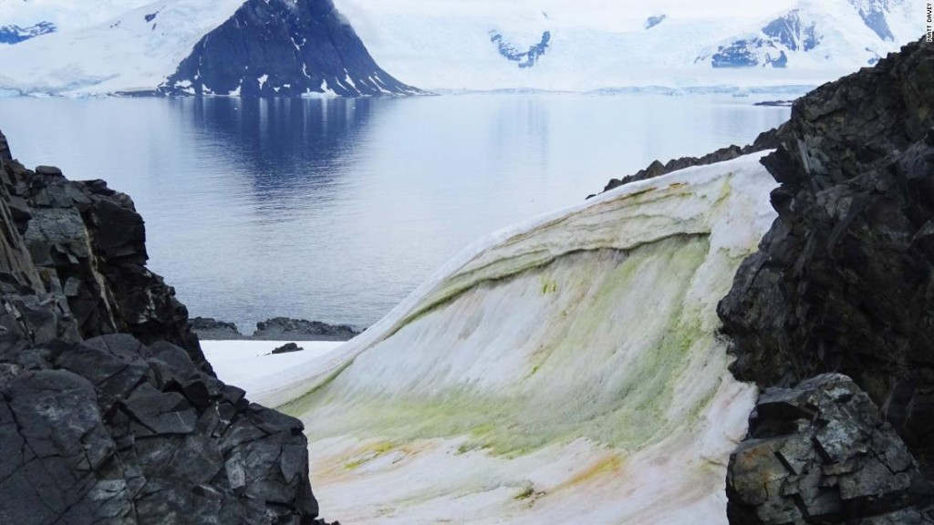 Snow is turning green in Antarctica -- and climate change will make it worse