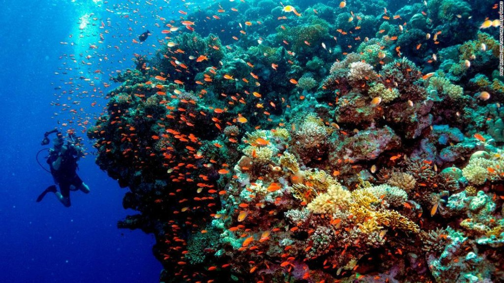 Glowing coral reefs are striving to recover from bleaching, study says