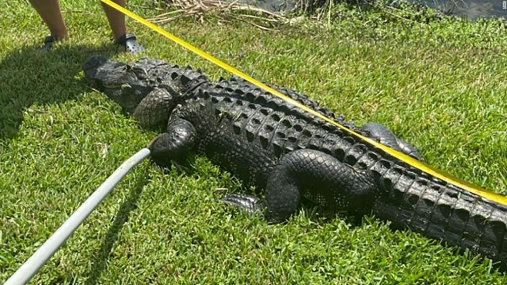 Florida Gators!? - cover