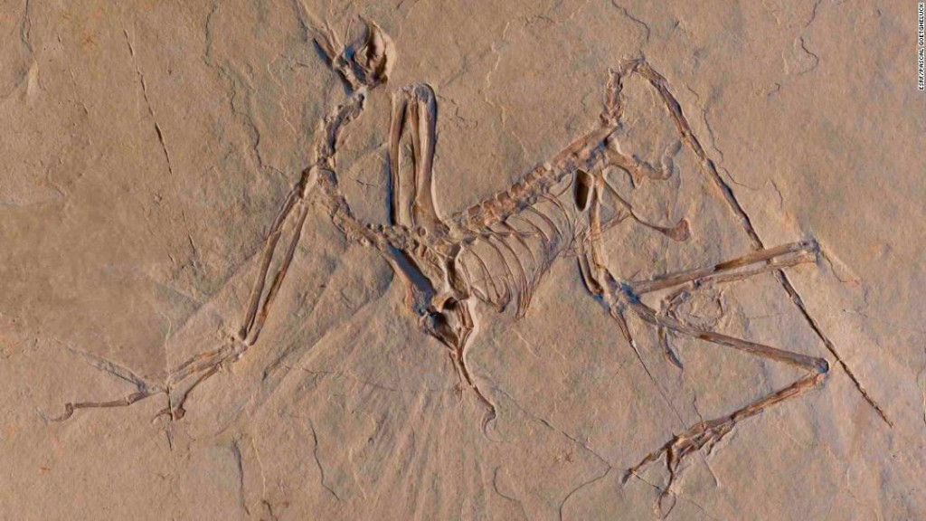 This feathered dinosaur didn't fly like modern birds