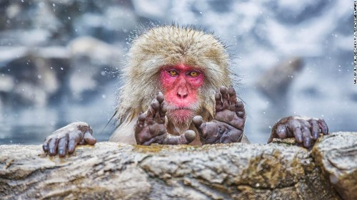 Comedy Wildlife Photos Awards finalists for 2019