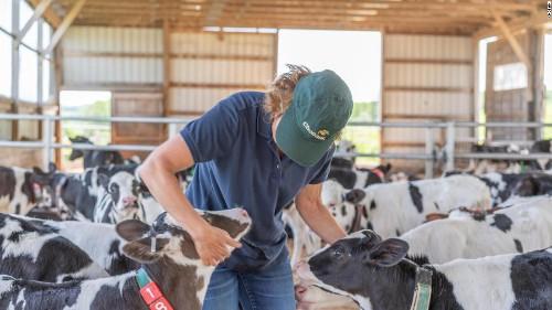 Chobani CEO: America is failing its dairy farmers
