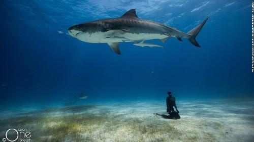 Simply breathtaking: Freediving couple's stunning underwater photo shoot