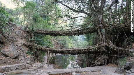 India's Meghalaya 'living root bridges' get stronger as the trees grow