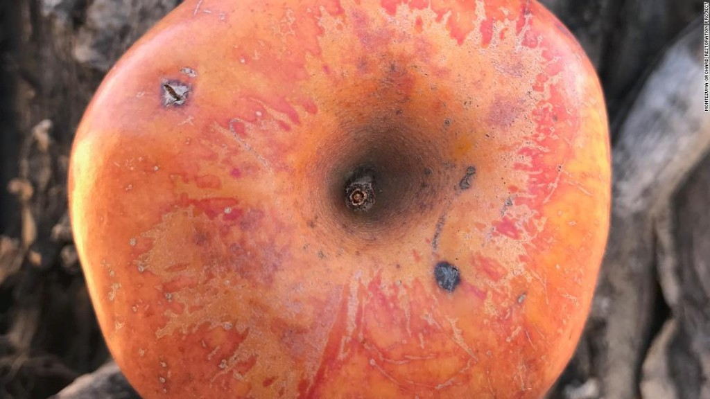 Colorado couple's 20-year search for extinct fruit finally pays off