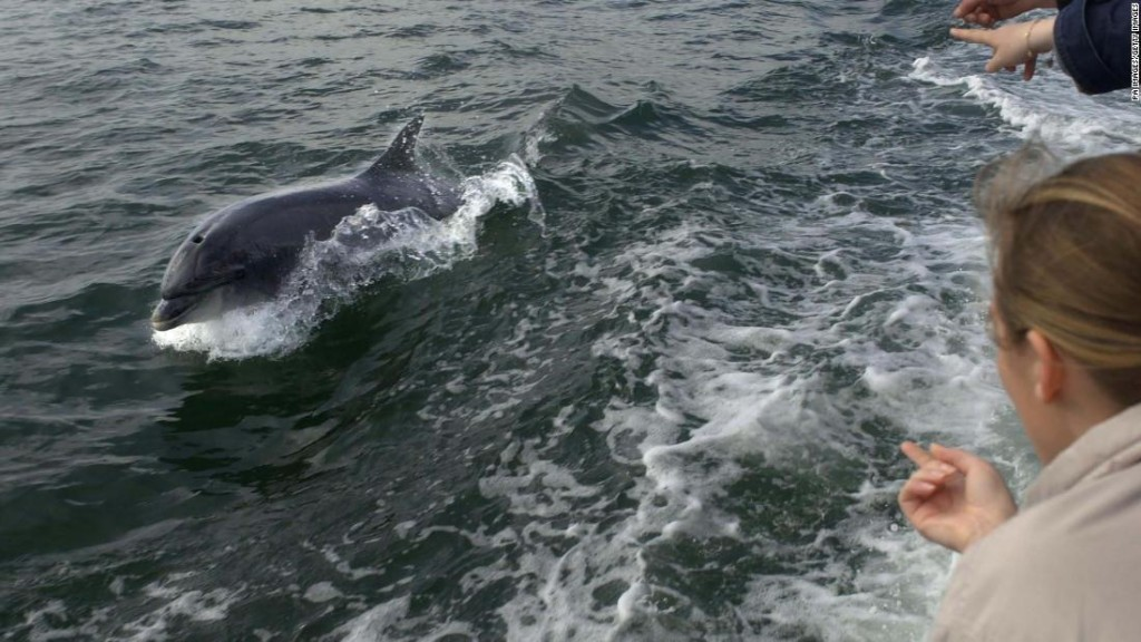 The search for Fungie: Ireland's beloved bottlenose dolphin who has gone missing after 37 years