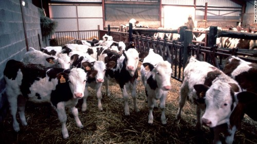 Mad cow disease case confirmed in Scotland