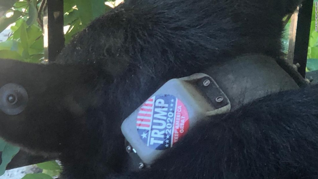 Animal rights group offers $5,000 reward for information on who put 'Trump 2020' sticker on a bear