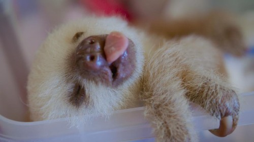 It's International Sloth Day ... so you have an excuse to be lazy