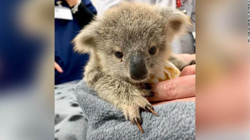 On a Good Note: Pouches For Australia's Orphaned Animals And A 17-Year-Old NASA Intern Discovers a Planet