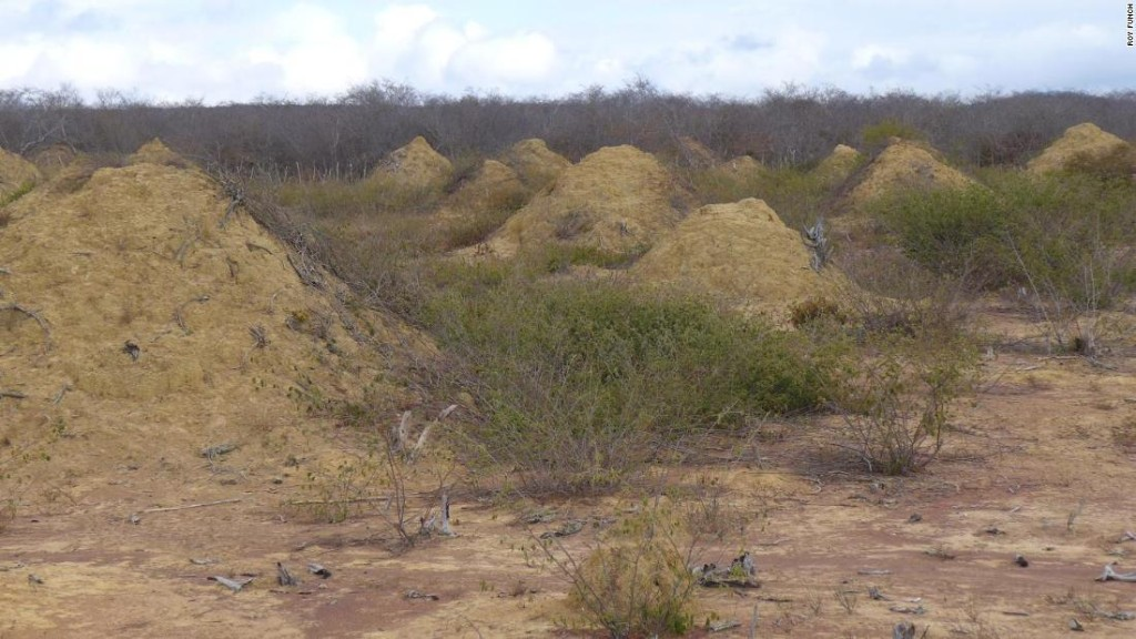 Ancient termite megapolis as large as Britain found in Brazil