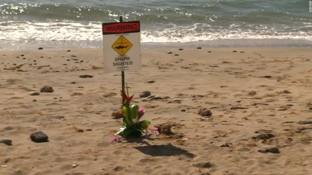 Shark attack kills man swimming off Maui, authorities say