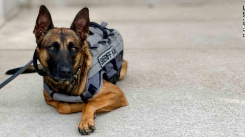 This dog was abandoned by her owner. Now she's thriving as a police dog