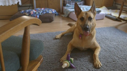 DNA saves dog from death penalty