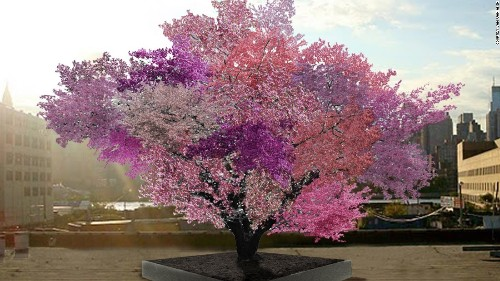 Art professor grows trees that can bear 40 types of fruit