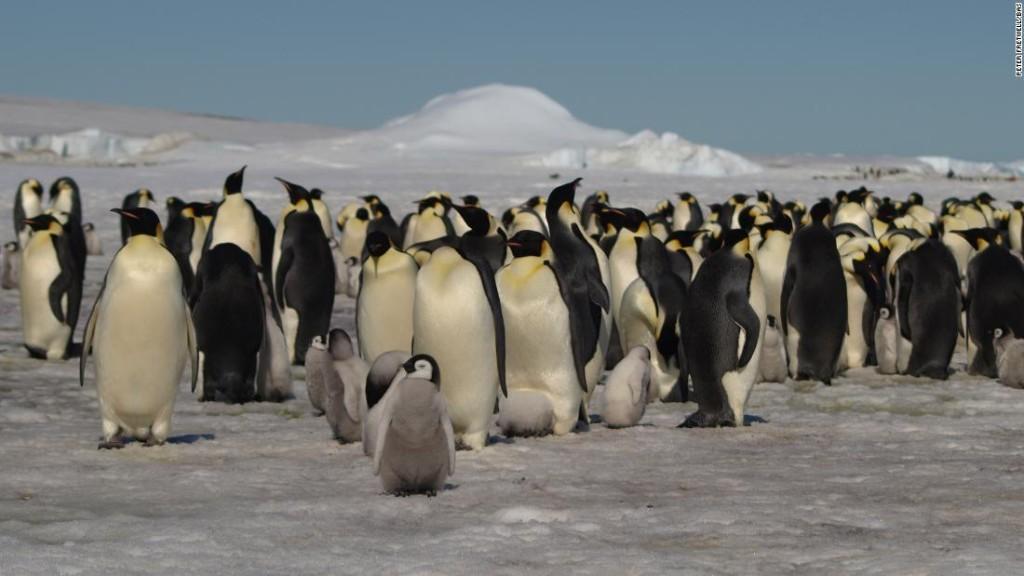 Satellite imagery reveals new penguin colonies in Antarctica